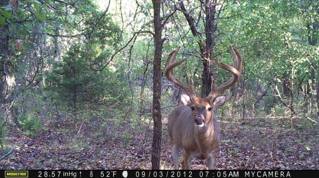Moultrie m-1100i image quality